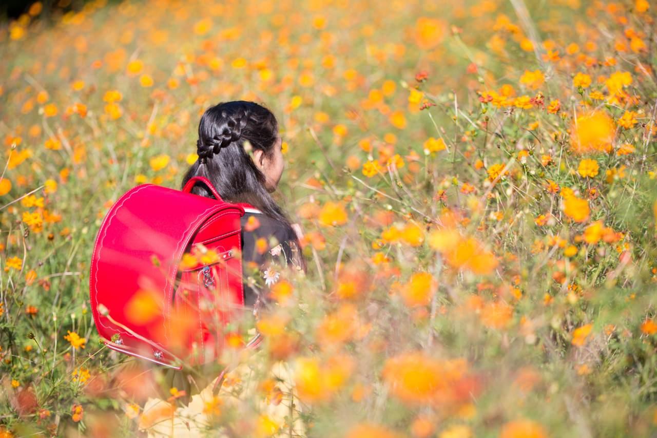オレンジのコスモスに映えるお子さま想いのランドセル〜山形県 面白山コスモスベルグ〜