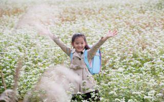 真っ白なそばの花畑に映える、フジタのお子さまにやさしいランドセル〜山形県天童市のそば畑〜
