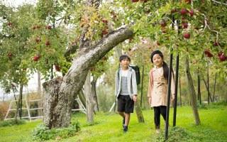 今が旬!真っ赤に染まるりんごとフジタのランドセル 〜果実への愛情たっぷり斎藤観光果樹園から〜