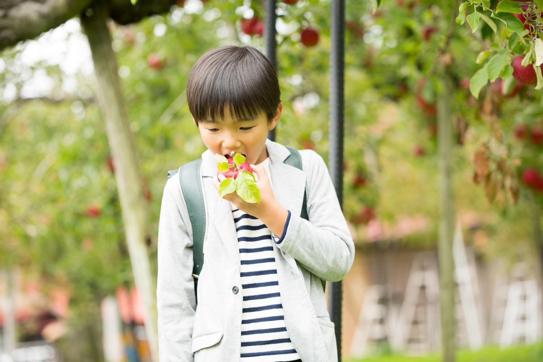 いくつかの品種を味わえる果樹園でしたら、間に紅玉の酸味を挟むといくらでも食べられそうな気がします