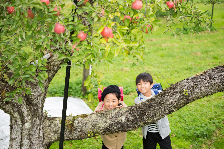笑顔あふれるりんご園とフジタのランドセル